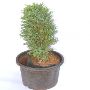 GiftzBag: Online Green plants Delivery in Ajmer