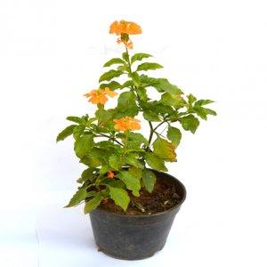 GiftzBag: Online Green plants Delivery in Ajmer