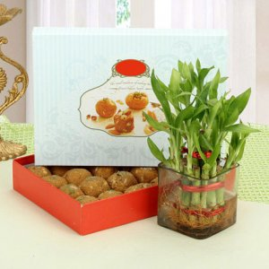 Giftzbag: Online Sweets with lucky plants Delivery in Ajmer