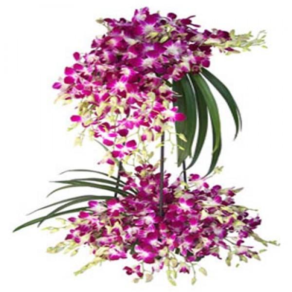 Buy Send Jumbo Orchid Basket