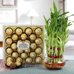 chocolate basket with plant