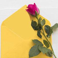 Rose & Card